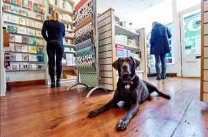As Nessa demonstrates, having a pet in a shop has been proved a benefit to a retailer's attraction to customers.
