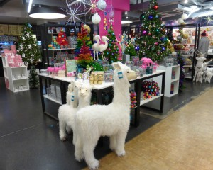 The llamas in the Paperchase Tottenham Court Road seem unperturbed by the furore.