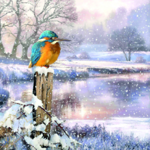 Fine art snowy scenes feature in the design line-up.