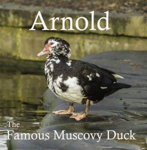 The Arnold the Duck card Mark has published that is helping to raise money for Nottinghamshire Wildlife Trust.