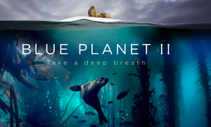 The Blue Planet II programme brought the environmental issue very much into focus for everyone.