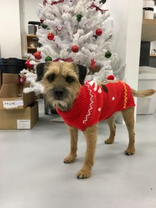 Bert. Blue Eyed Sun's office dog in his Festive Friday outfit!