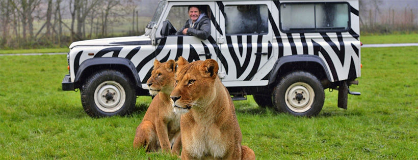 Anyone who buys a full complement of All Creatures will go into the draw to win a weekend at Longleat Safari Park.