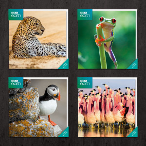 The BBC Earth range features iconic images from the BBC natural history series' Blue Planet II, Planet Earth II.