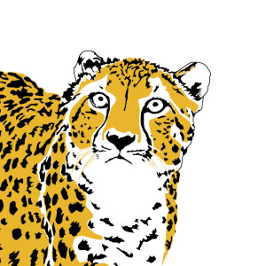 Penguin Ink is adding to its Wild range with the addition of new Safari designs, including this striking Cheetah.