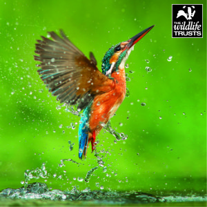 The publisher has enjoyed a long running licensing relationship with the Wildlife Trusts.