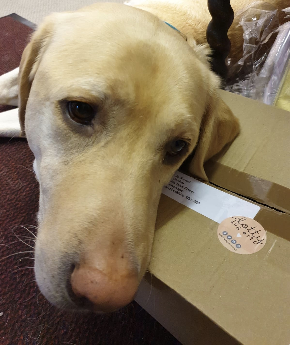 Above: One of Jo's dogs, Orerry showing his appreciation of the delivery from Dotty Dog Art Cards.