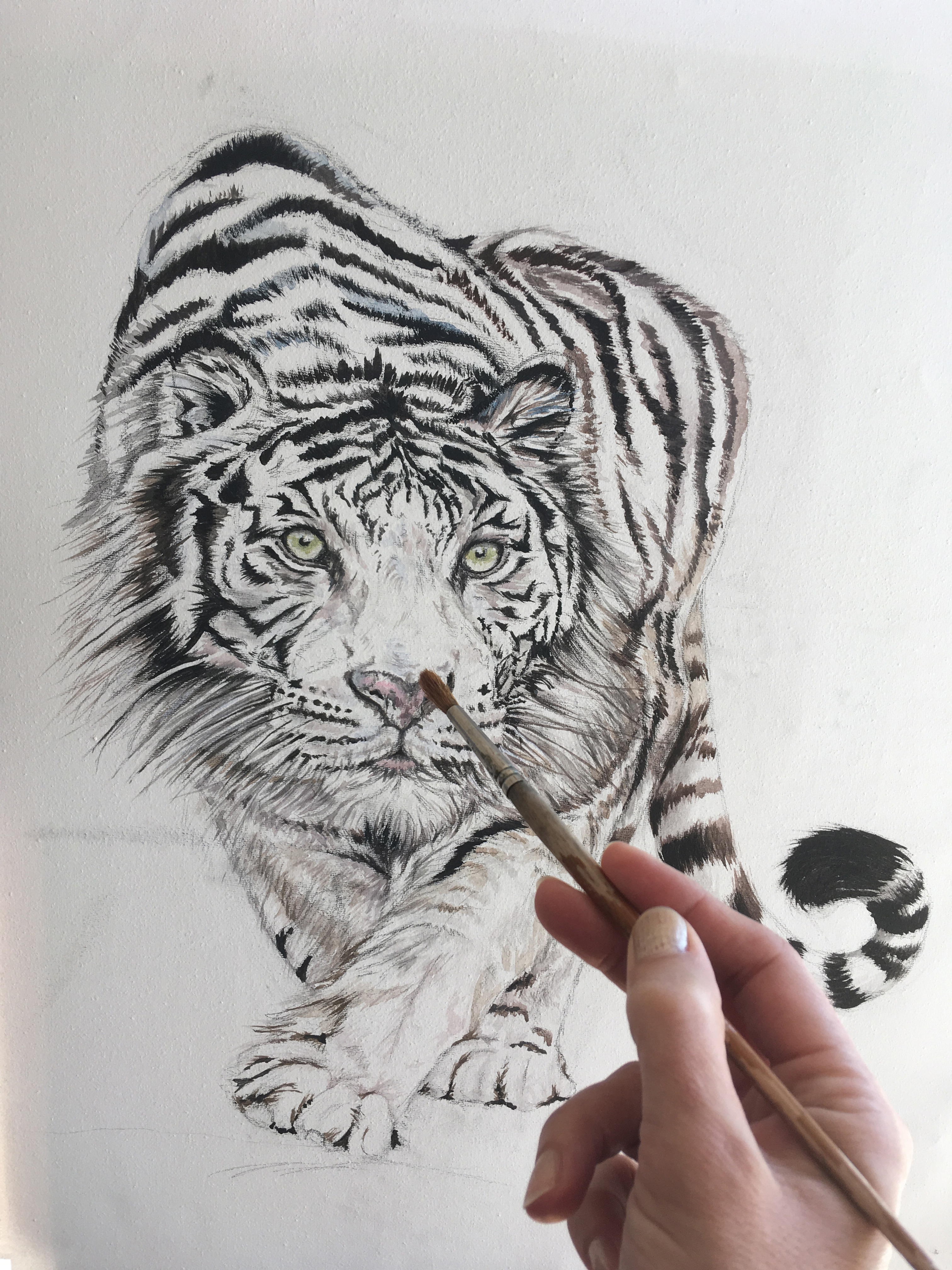 Above: The white tiger painting that Sally worked on, live on air.