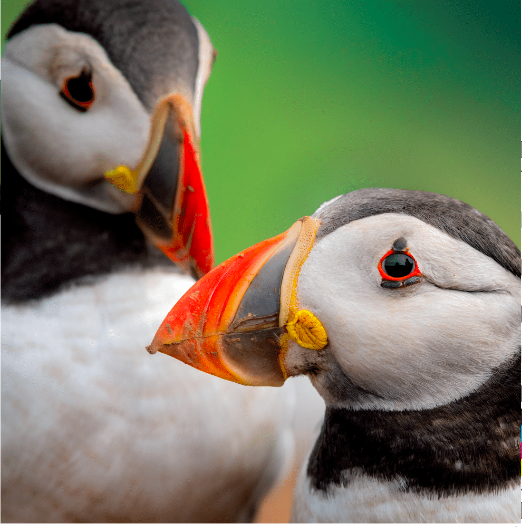 Above: The Eco-friendly Card Co (Glebe Cottage) is launching its brand-new photographic cards brochure at the Autumn Fair, which includes lots of new designs in its Wildlife Trusts collection. (Hall 6 Stand E10).
