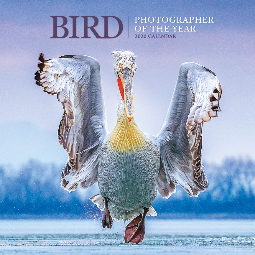 Above: The Bird Photographer of the Year calendar launches officially at Bird Fair this Saturday (August 17).
