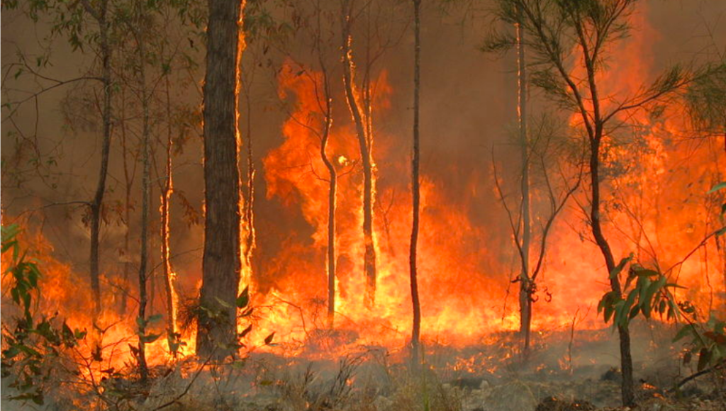 Above: The fires in Australia continue to rage, causing devastation to communities and wildlife.