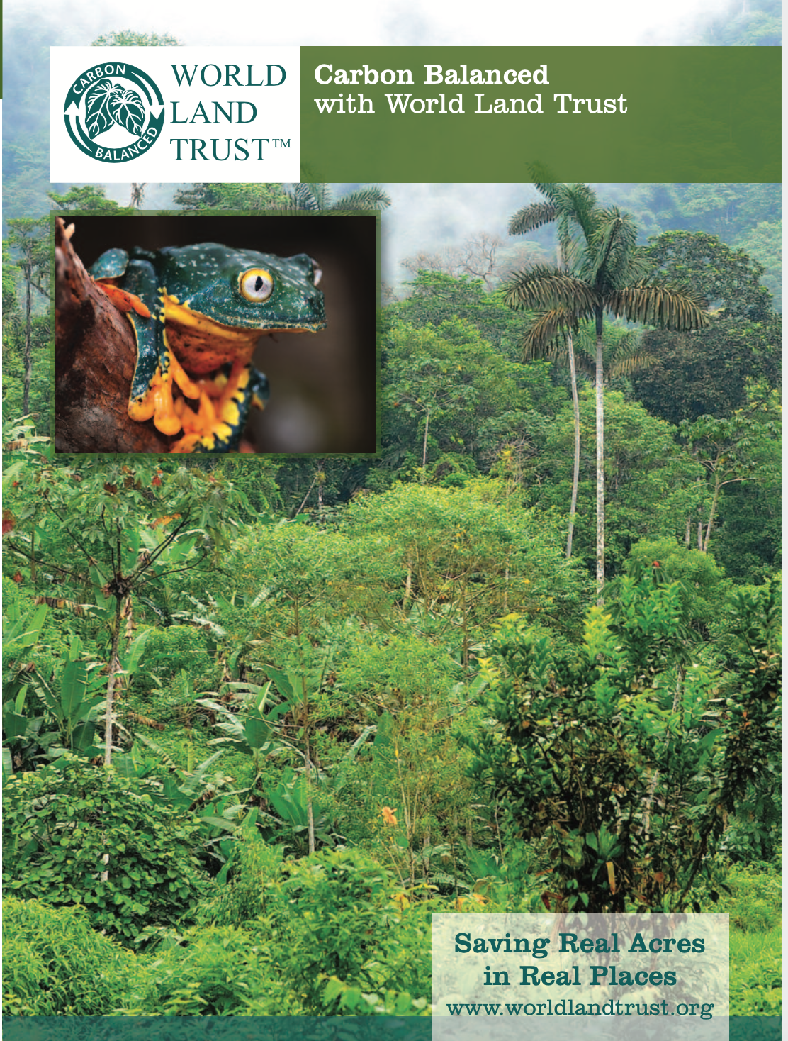 Above: Participating publishers will be able to printing the World Land Trust logo on the backs of greeting cards using the accredited boards.