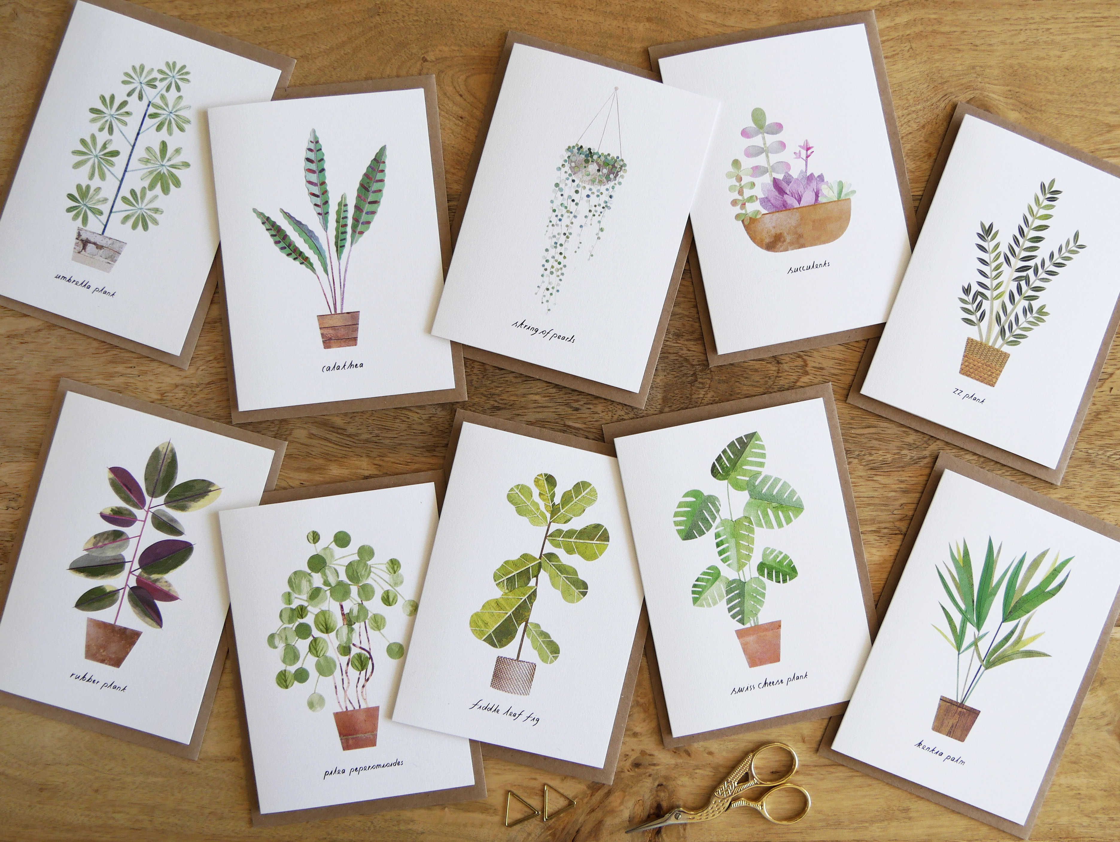 Above: Some designs in Paperwhale's Botanics card collection.