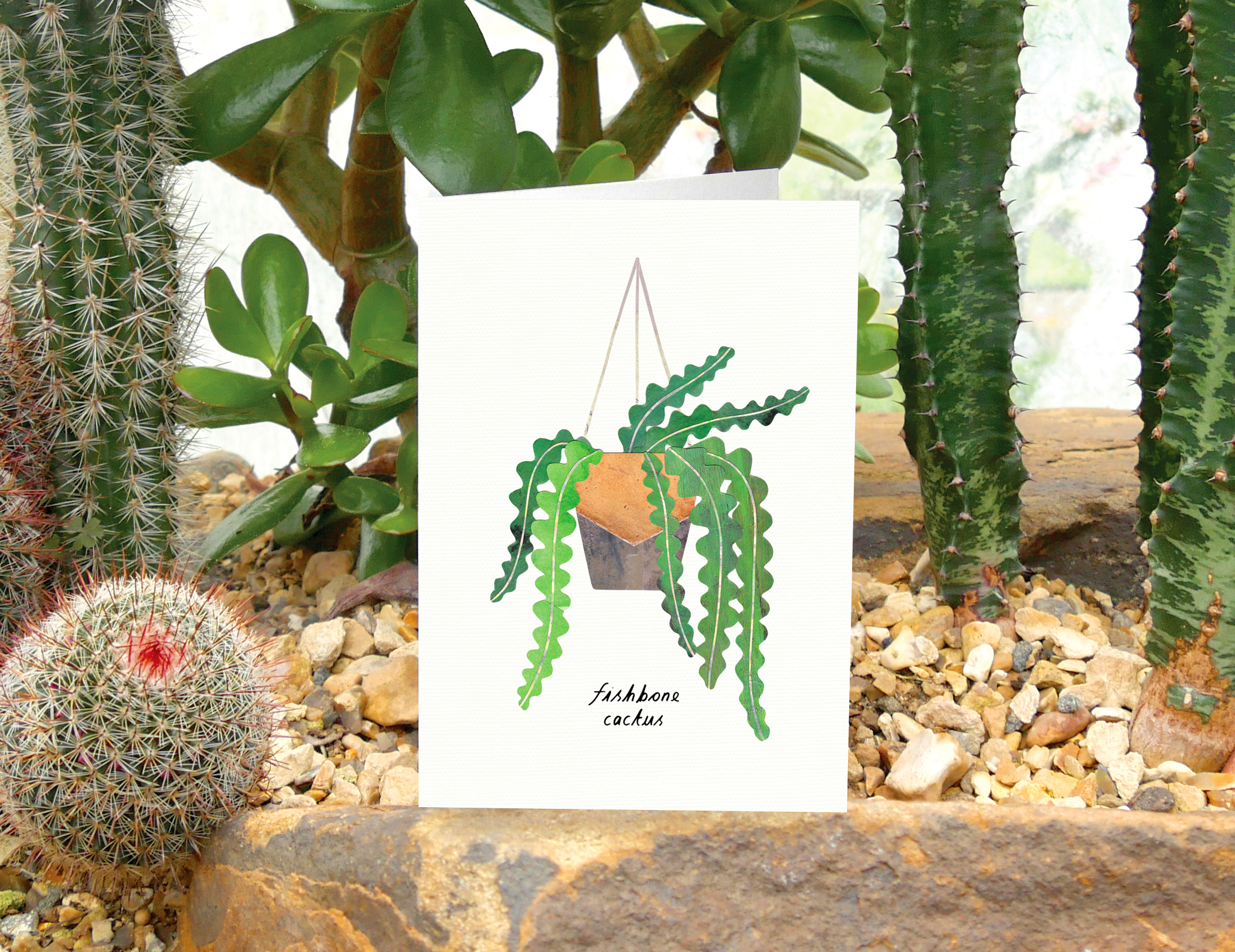 Above: Lianne's current fave pot plant is a Fishbone Cactus.