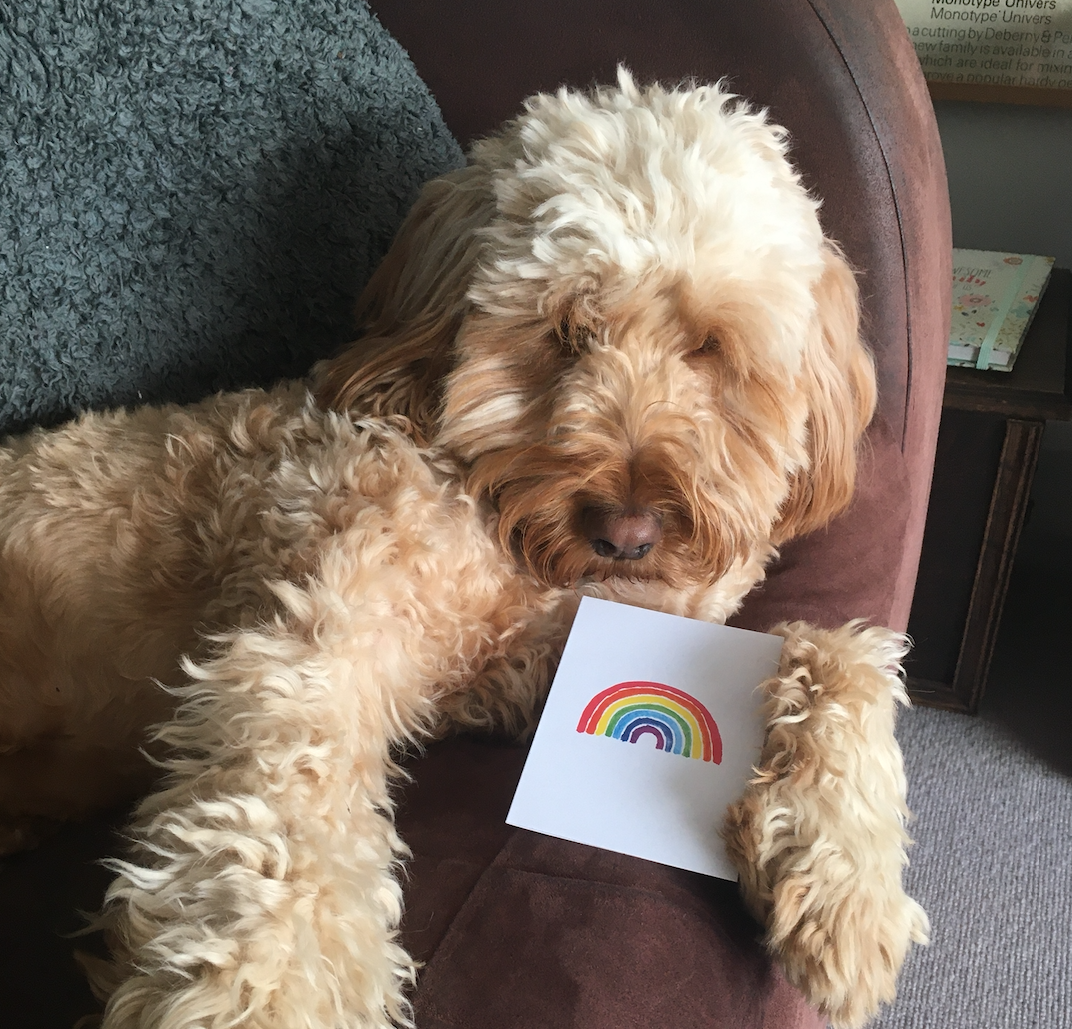 Above: The Earlys' dog Buddy, the 'poster boy' of the #connectwithcardsCampaign.