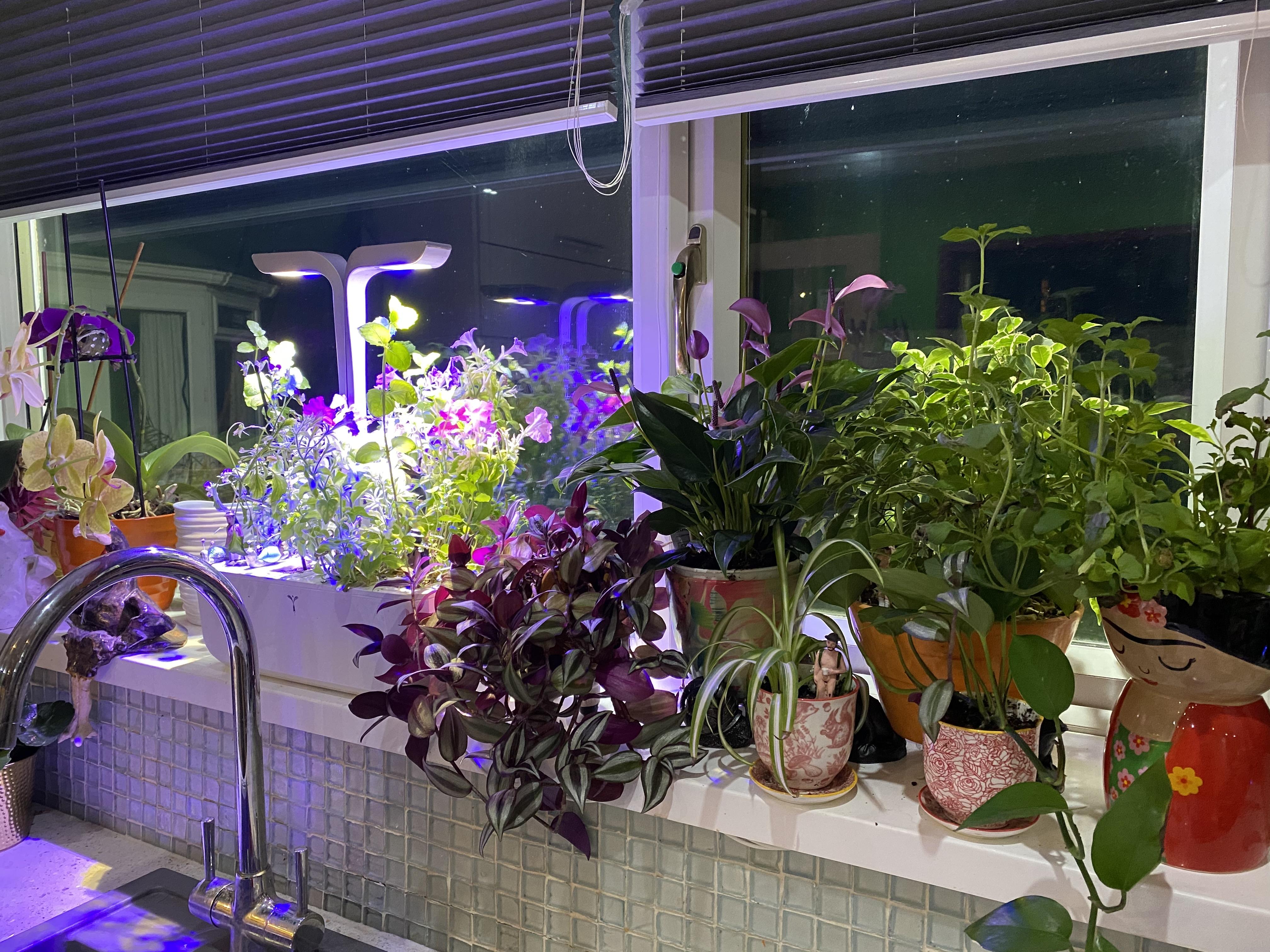 Above: The green shoots on Rosie's kitchen sill garden!
