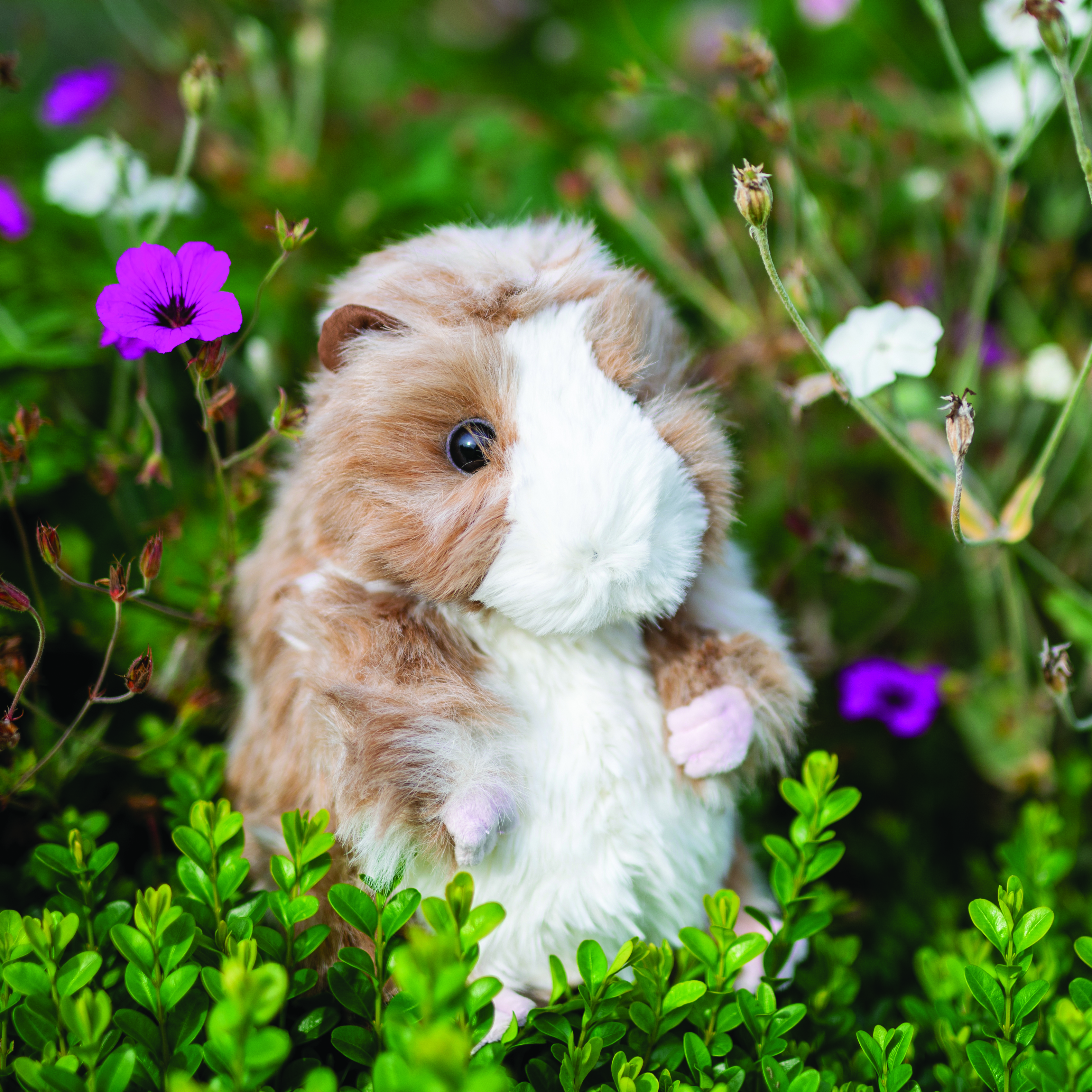 Above: Meet Daphne the guinea pig!